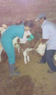 10 bin hayvan aşılandı