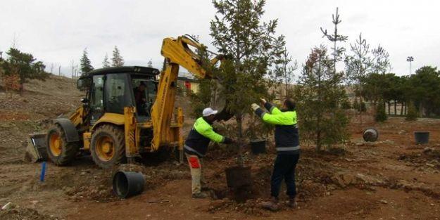 Malatya#039;da Son 3 Ayda 15 Bin Ağaç Dikimi Yapıldı