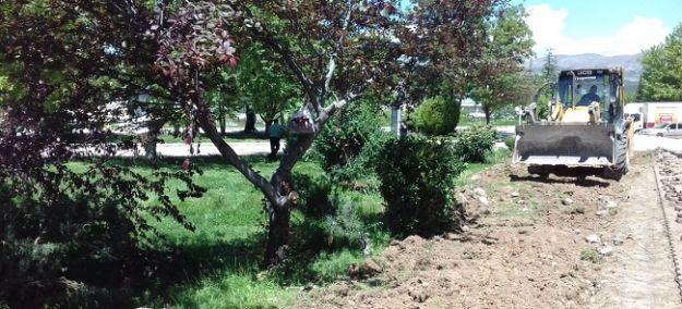35-40 yıllık çam ve çınar ağaçları söküldü