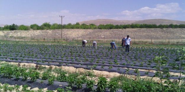ZMO Başkanı Çiçek: Tarımsal üretimin artırılması milli mesele olmalıdır