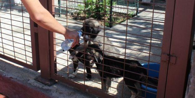 Kent Konseyi'nden 'Hayvanlara merhametli olun' çağrısı