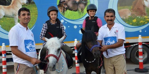 Pony atlarına çocuklardan yoğun ilgi