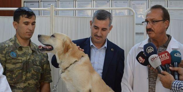 """'Dedektör köpeklere"""" hassas bakım"""
