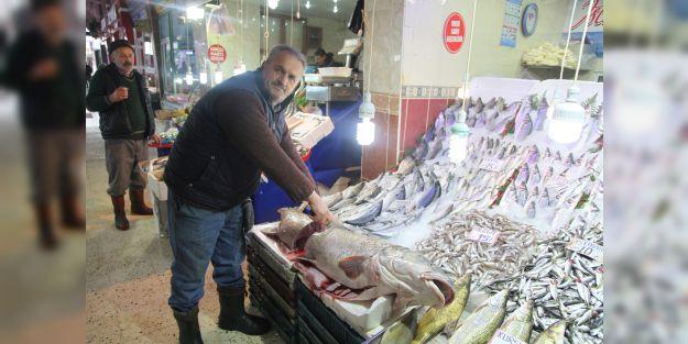Malatya'da 45 kiloluk kurşun balığı yakalandı
