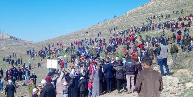 Orduzu Pınarbaşı'nda Fidan Dikimi