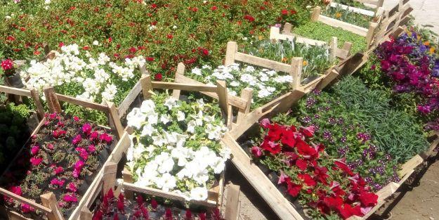 6 milyondan fazla mevsimlik çiçek dikildi