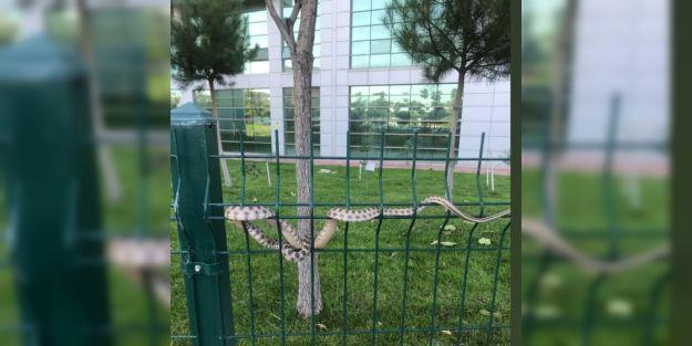 Hastane Bahçesinde Yılan