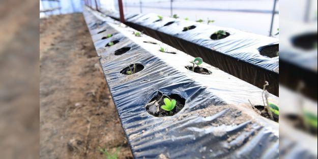 Çınar, 'Yeşil Gıda Seracılık' alanında incelemeler yaptı