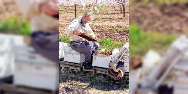 Organik arı yetiştiricilerine 10 TL kovan desteği