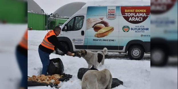 Hayvanlar için doğaya yiyecek bırakıldı