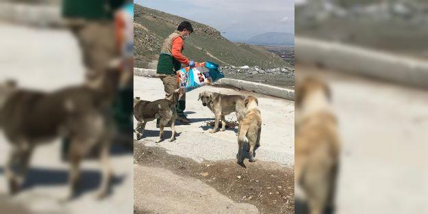 Sokak hayvanlarına yiyecek bırakılıyor