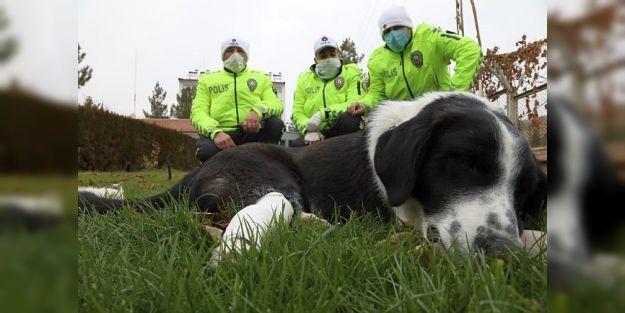 Ayağı Kırılan Köpeğe Polis Sahip Çıktı