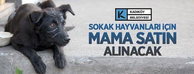 Sokak Hayvanları İçin Mama Alınacak