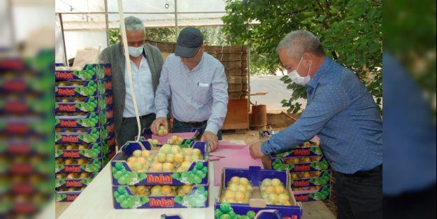 Mersin'de Yaş Kayısının Fiyatı 100 Lira