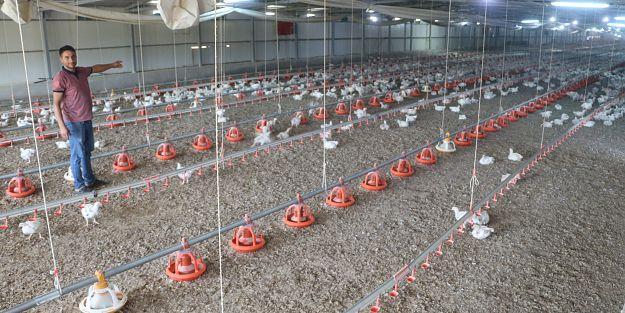 Elektrik kesildi binlerce tavuk telef oldu