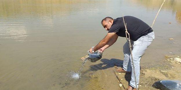 Malatya'da göletlere 120 bin yavru balık bırakıldı