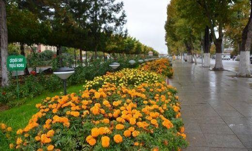 350 Bin Çiçek Dikilecek