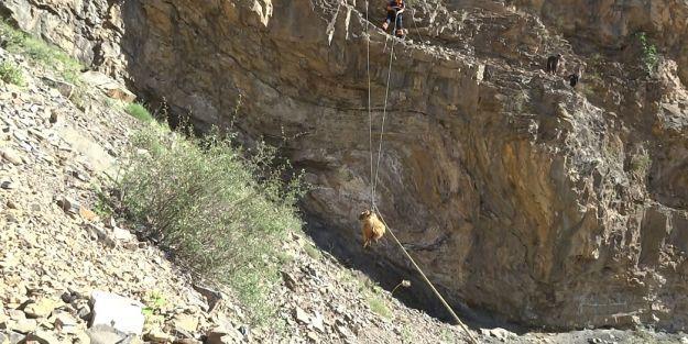 AFAD'dan keçiler için nefes kesen operasyon