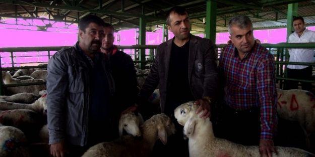 Birlik Başkanı Akın, Canlı Hayvan Pazarını Ziyaret Etti