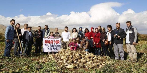 Elma Ve Pancar Hasadı Fotoğraflandı