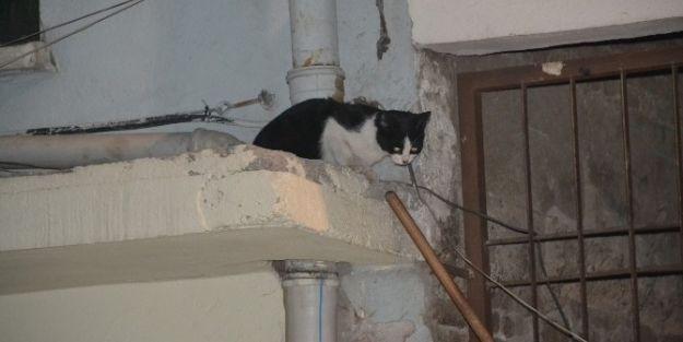 Esnaflar, Kedinin İnadını Kıramadı