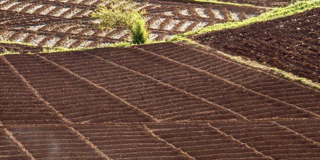 Malatya'da tarım alanları yüzde 22 azaldı
