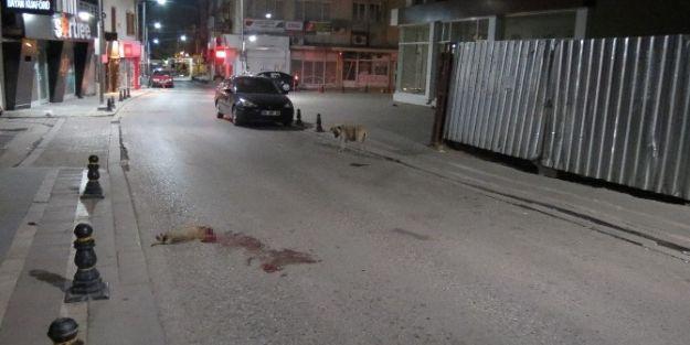 Ölen Yavrusunun Başından Ayrılmadı, Yoldan Geçen Araçlara Saldırdı