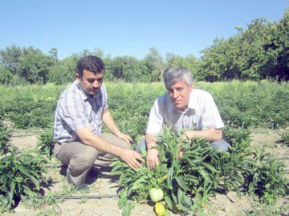 'Pepino' üretimi anlatıldı