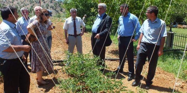 Pütürge'de Organik Tarım Ve Sebzecilik Toplantısı