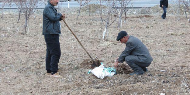 Sofralık Kayısı ve Erik Bahçesi Projesi 3. yılına girdi