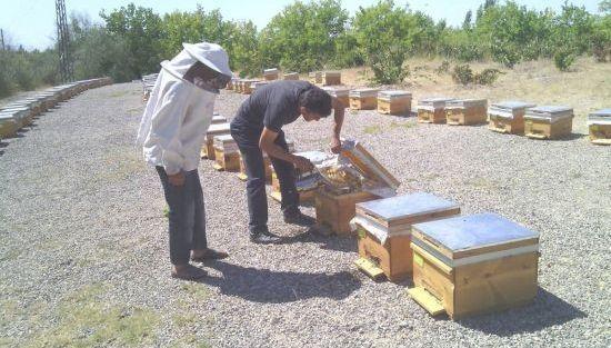 Tarımsal Yayım Ve Danışmanlık Projesi